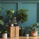 Welke bamboehaag moet je hebben?